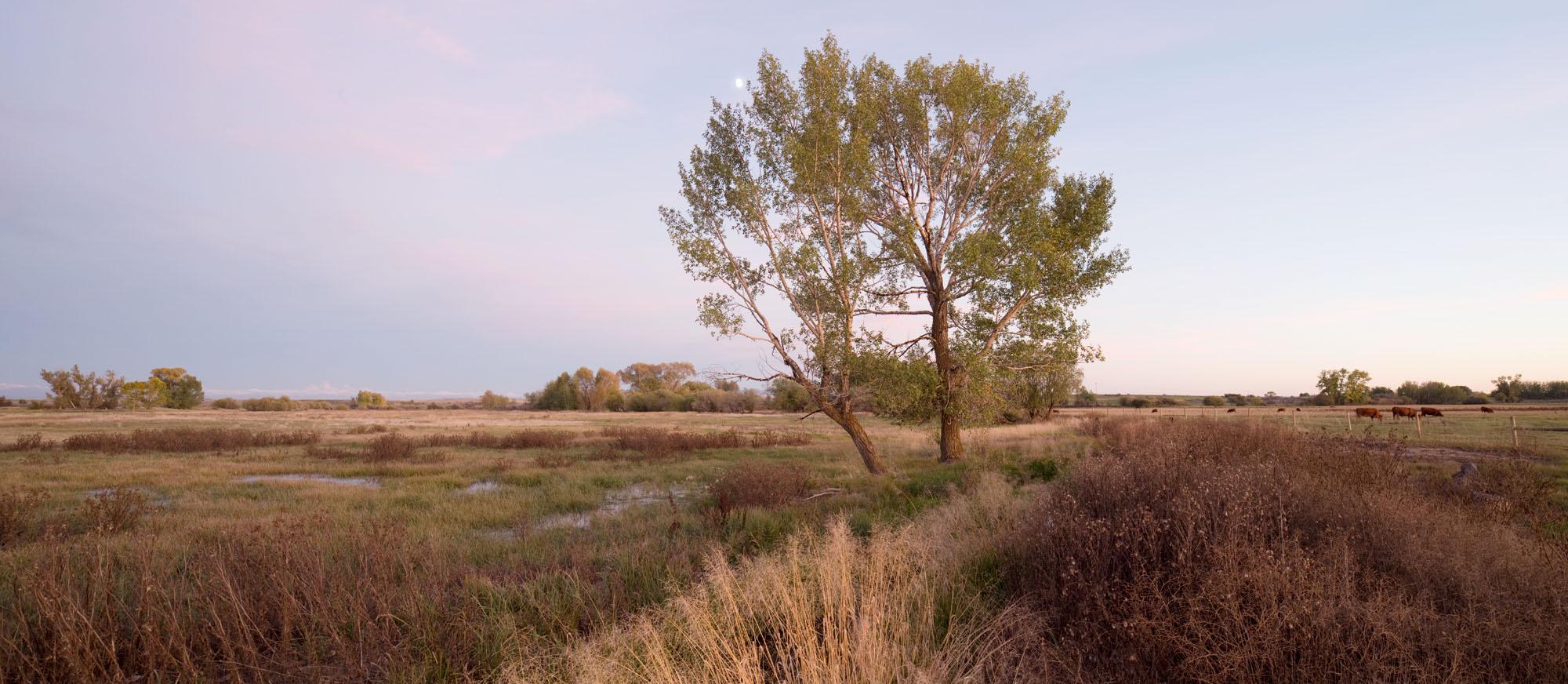 Untitled_Panorama6