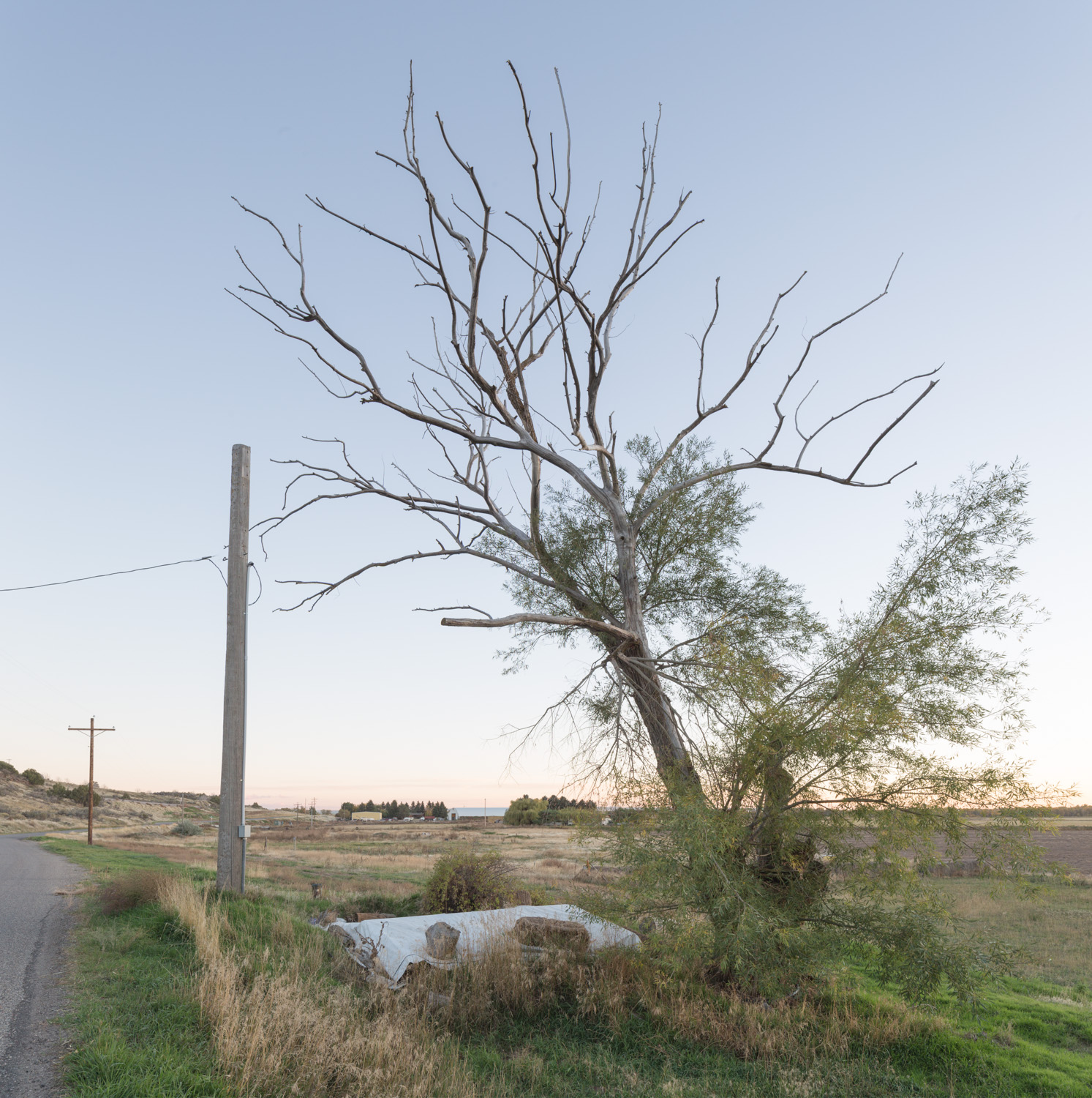 tree_ditch_archer01