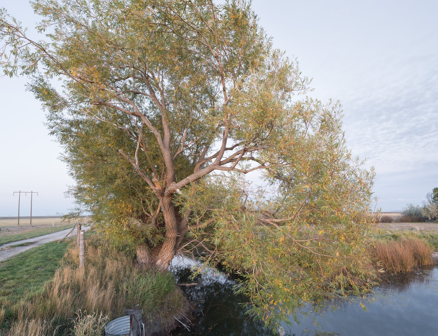 tree_market_lake03
