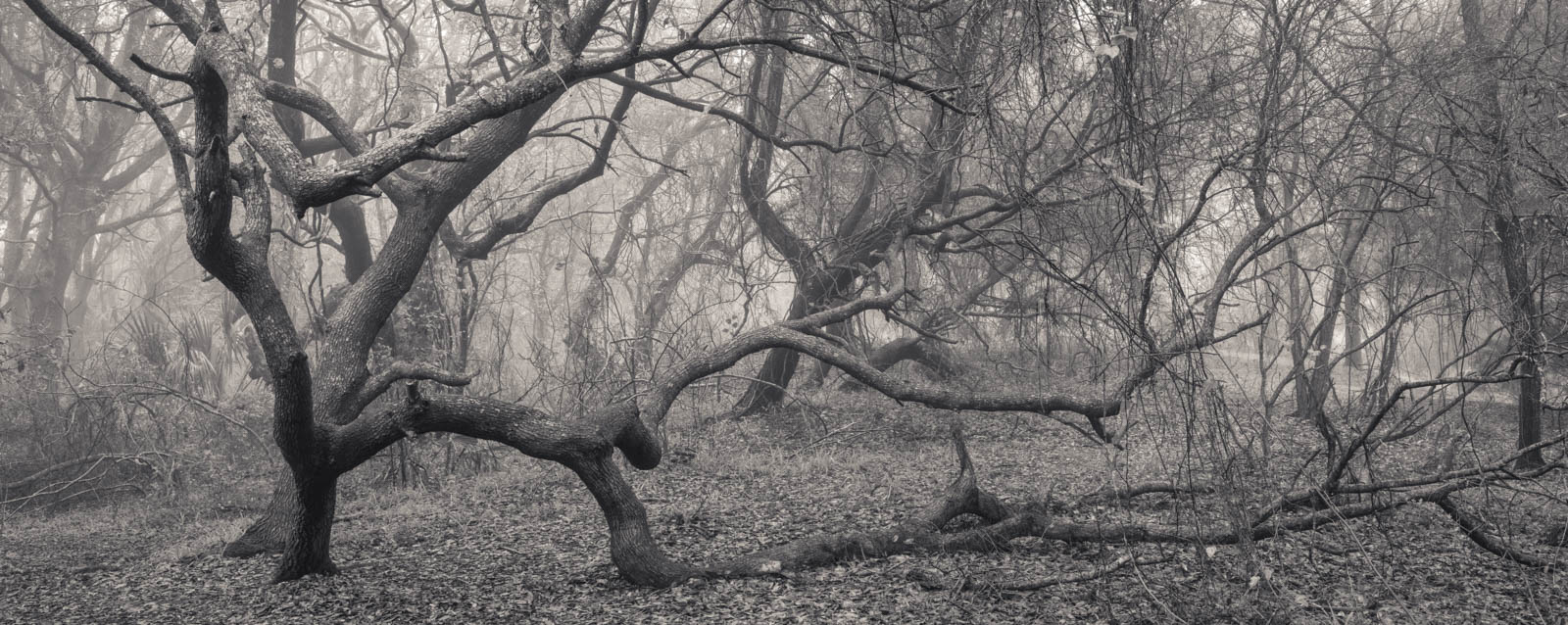 dauphin_island_shell_mounds_fog11
