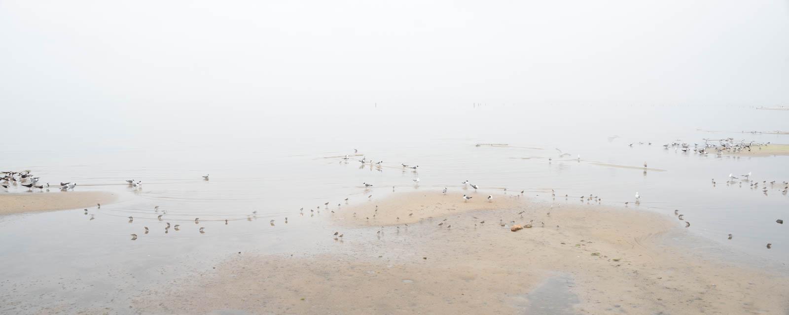 mississippi_coast_birds01