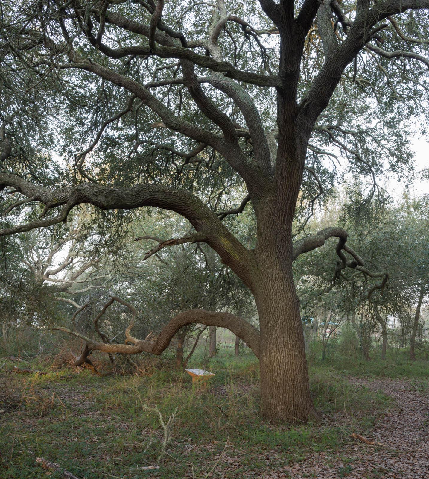 peveto_woods10