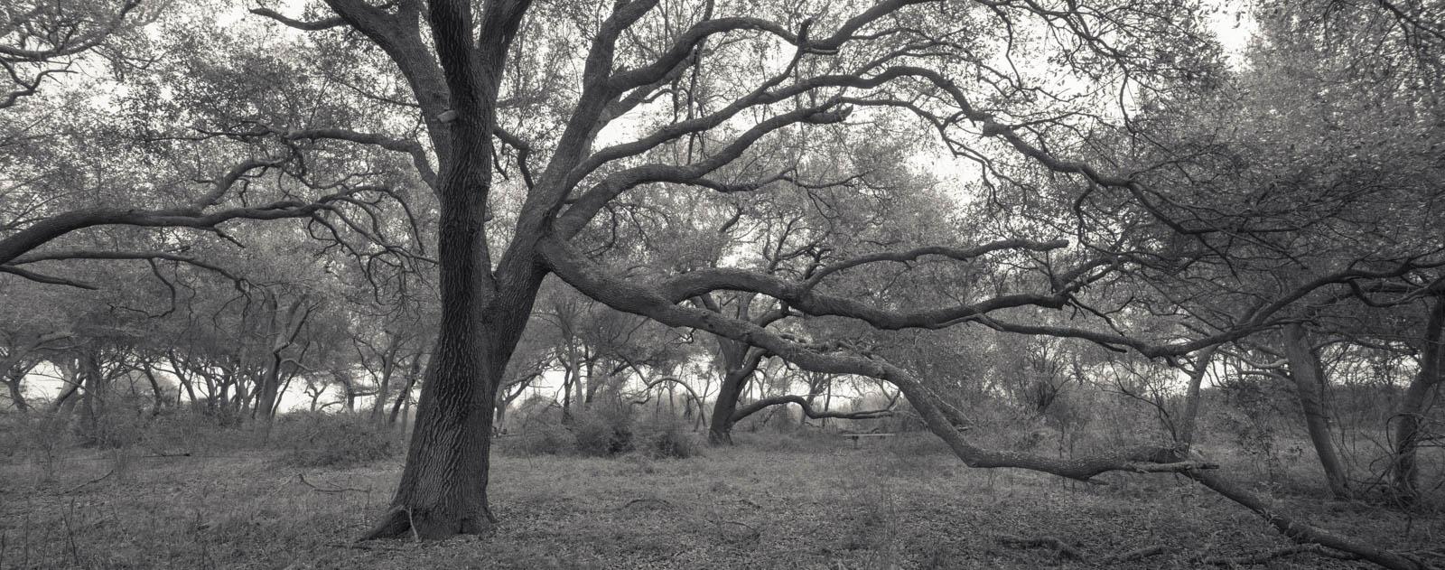 peveto_woods11